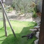 Cafe Restaurant Garden - お店の庭にかわいい猫がいました