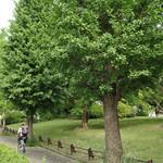 コマザワ パーク カフェ - 駒沢公園ドッグランに向かう道
