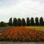 とみたメロンハウス - 花畑
