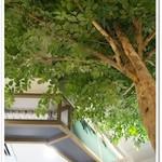 Organic Cafe あたたかなお皿 - 店内の大きな木