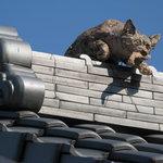 5223933 - 屋根から狙っているものは?干物かなぁ・・・
