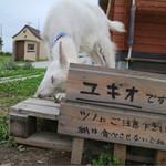 風と手と土 - ユキオという山羊がいます♪