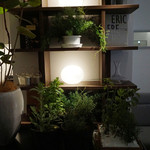 Élan.MIYAMOTO - 店内にも緑が豊富でいい香りがします