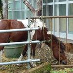 グリーンワールド - 2010.9 外に動物がいます