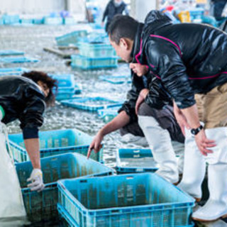 全国各地から新鮮な魚介類が集まる場