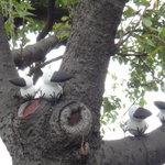コルセール - 庭の木のアップ
