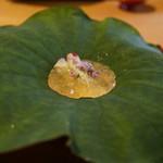 52707042 - 車海老、明石蛸、烏賊をオクラの花弁でつつんで、生姜を利かせたジュレ