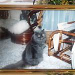 エーエス クラシックス ダイナー - このコが L.A.CAT