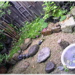 52896385 - 雨の日の中庭