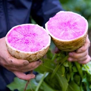 【有機野菜!】契約農家から直送
