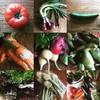 ハルクッチィ - 料理写真:藤沢の無農薬のお野菜を中心に