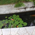 オステリア パーチェ - 階段脇の池