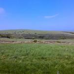夢食館 北市場 - 宗谷牧場の黒牛が放牧されている