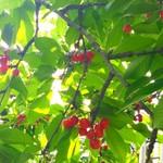 広果園 -