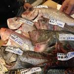 53474731 - おすすめの魚たち