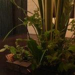 神山 - 植物