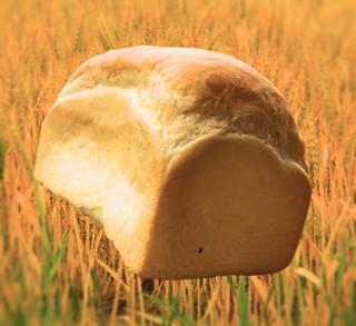 コーデュロイ - 2016 ベーシック 小麦の中でフライング中