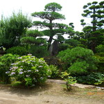 Katsunuma 縁側茶房 - お庭