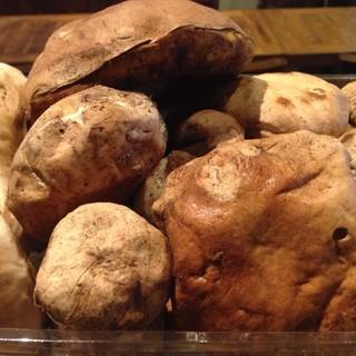 イタリア産ポルチーニ茸