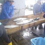 東風 - 当店で取り扱っているお魚は毎朝室戸で獲れた、新鮮朝捕魚を仕入れてますので、鮮度、味は抜群です。
