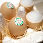 SUGALABO - 卵のプリン