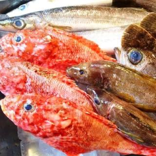 漁港より直送の朝獲れ魚貝をTOKYOで!