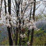 寿司龍 - 山に咲く花、見るだけで力が湧くそうです。