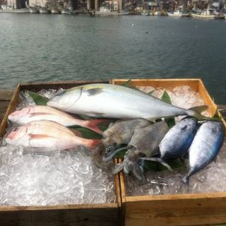 富山県氷見より直送の鮮魚