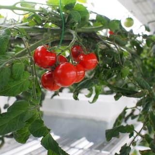 ◆ソムリエ・野菜ソムリエ・管理栄養士で健康を考えた提案◆