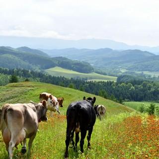 テレビや雑誌に紹介!萩原牧場の新鮮牛乳を使ったソフトクリー夢