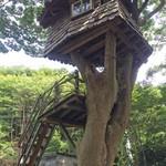 54278066 - 忽然と姿を現したツリーハウス