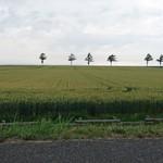 みるきぃふぁーむ - メルヘンの丘