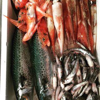 漁港直送の魚介は鮮度に自信あり!