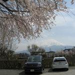 5452161 - 桜と富士山