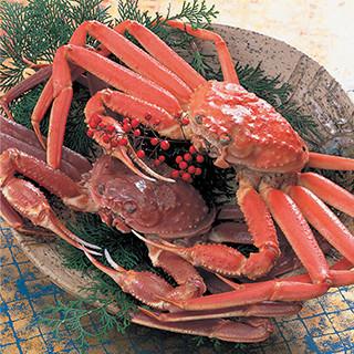 香住漁港から直送された新鮮なカニとお魚