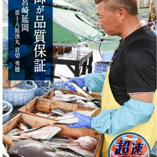 メディアで話題!■超速鮮魚■漁港で水揚から12時間で届く鮮魚