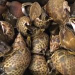 秋田県産 黒ばい貝の煮付け