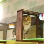 猫カフェととの森 -