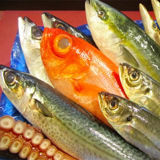 平塚港をはじめ、全国の漁港から直送している自慢の鮮魚たち!
