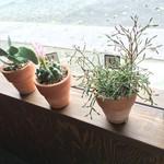 カップス コーヒー&カップケーキ - 窓際サボテン可愛い