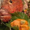 小糸ちゃん - 料理写真:刺し盛り