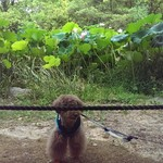 ベーカリー ピカソ - 容疑者M犬!