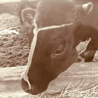 最高品質の米沢牛と、現地生産者の想いを皆様にお伝えしたい