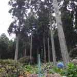花園あじさい園 - 花園あじさい園