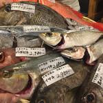55002334 - その日のお勧めの魚