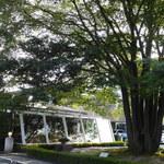 ドルフ - 大きな楠木のよこにサンルーム