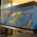 きろく - 水槽には常時新鮮な魚が泳いでいます。