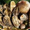 勇栄丸 - 料理写真:かきの他にも海産物、いろいろ取り揃えております。