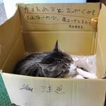 55347519 - 猫ちゃん
