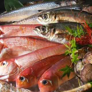 【和食が自慢の店】京都舞鶴港直送の新鮮魚料理をご堪能下さい。